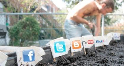 Social-Media-Plants